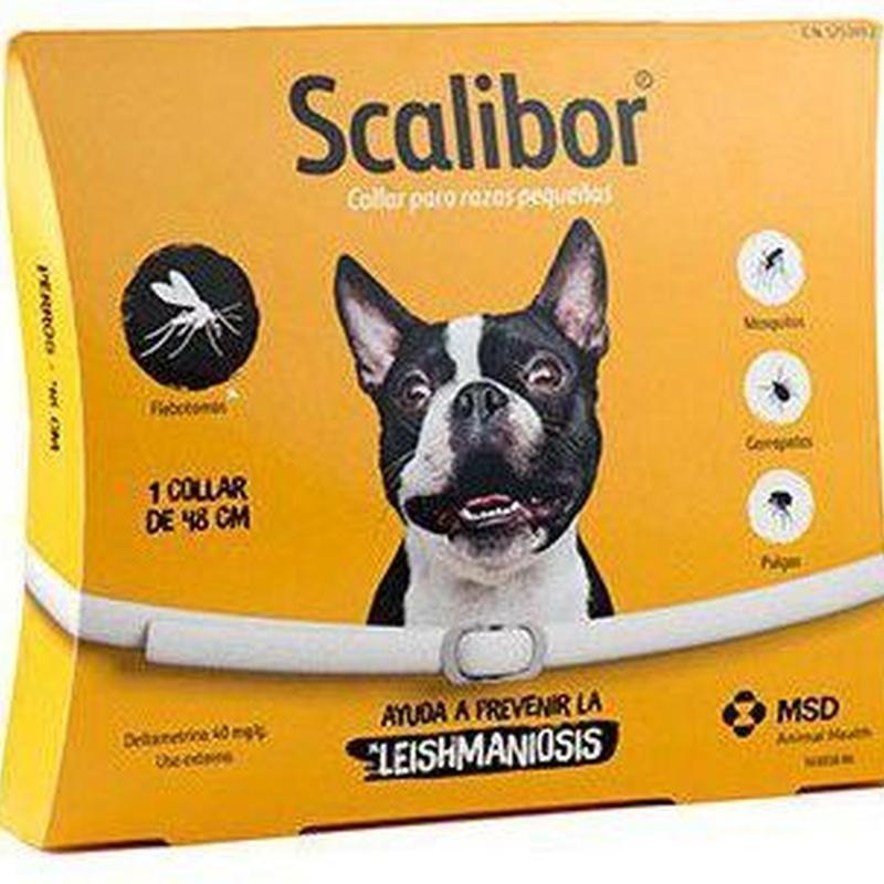 Scalibour 48cm perro : Para tu mascota de New Art Can