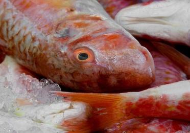 Pescados y mariscos en venta