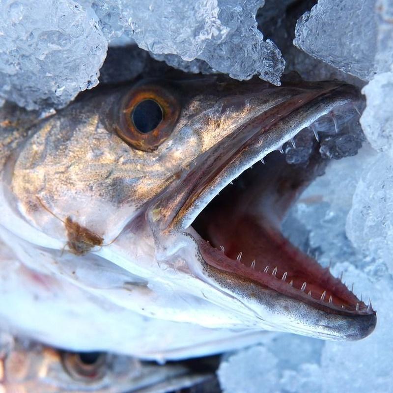 Pescados y mariscos en venta: Servicios de Pescados Cano