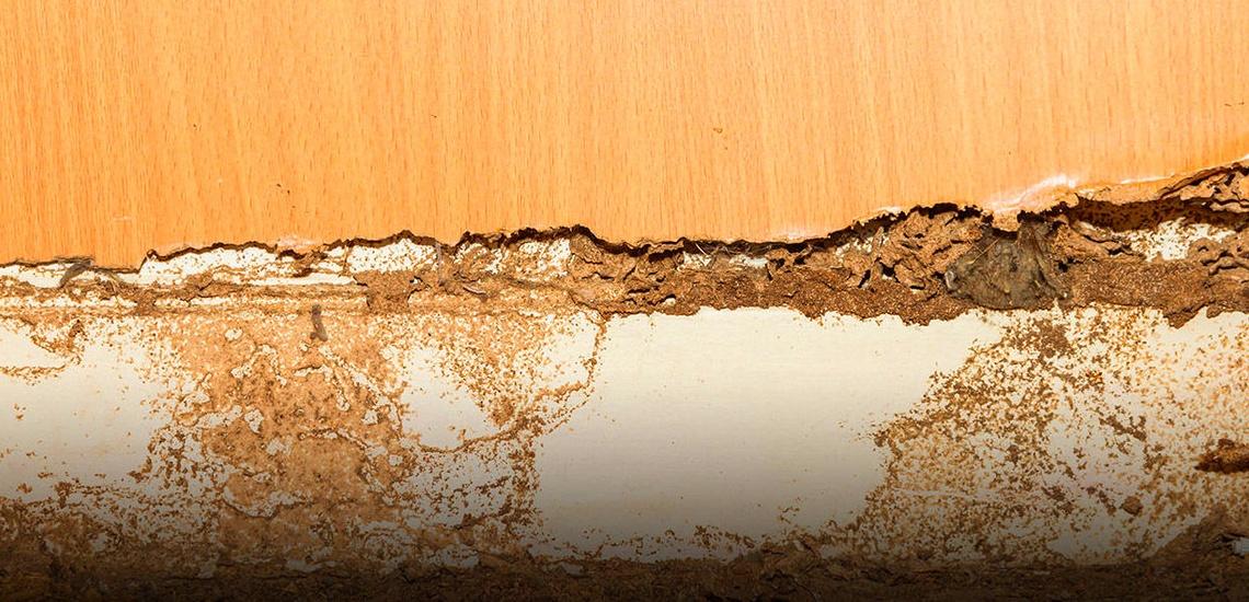 Tratamiento de termitas en Cádiz