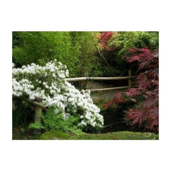 Parques públicos: Mantenimiento de Jardines de Jardinería Suso