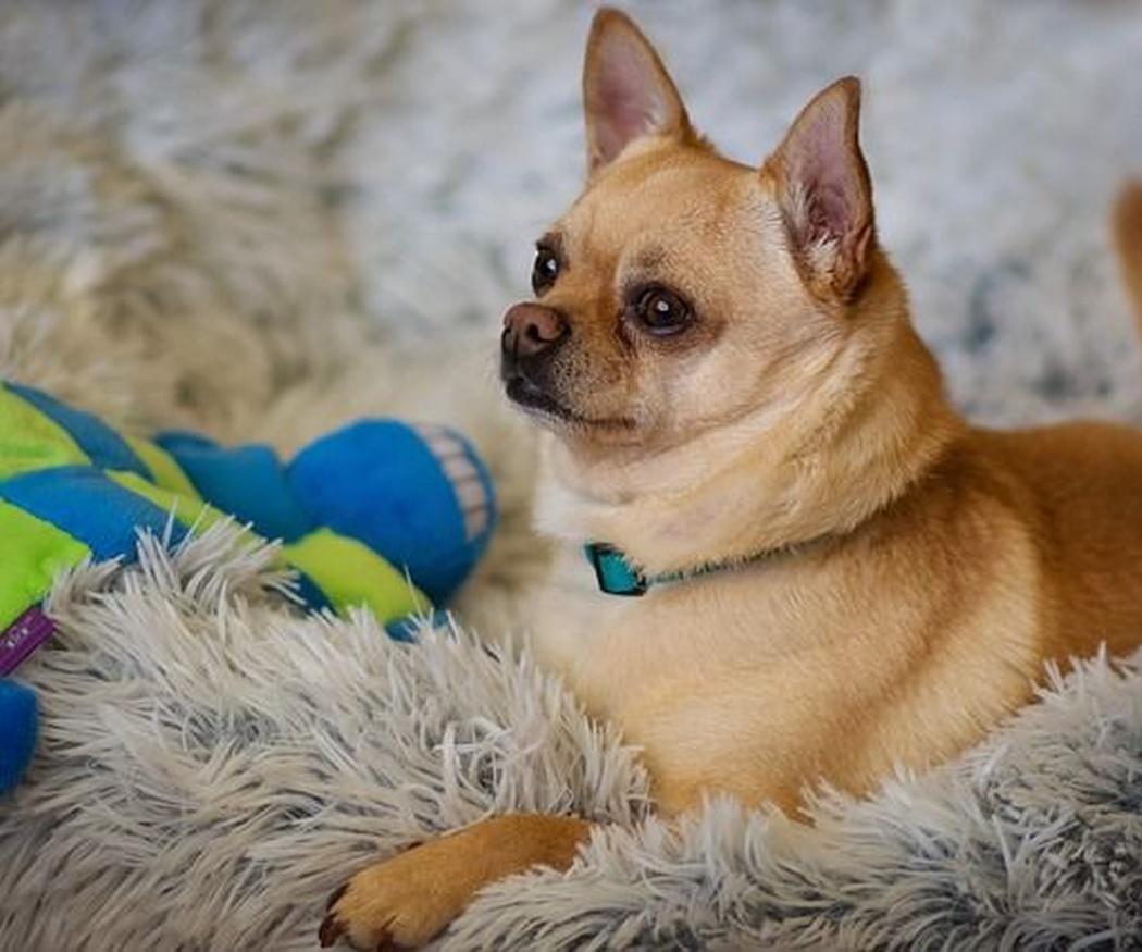 ¿Qué es una guardería canina?