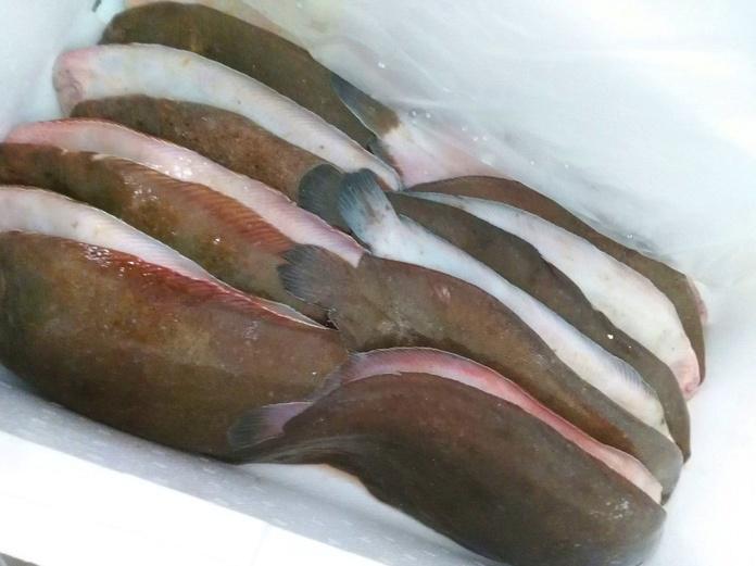 Lenguado : SERVICIOS de Pescastur