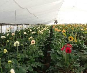 Venta al por mayor de todo tipo de variedades de flor cortada