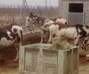 Veterinario para perros, gatos, animales de granja y caballos y animales exóticos