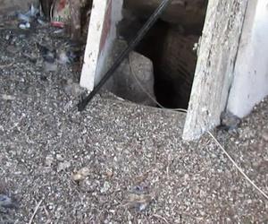 Restauración de campanas - Protección anti-palomas
