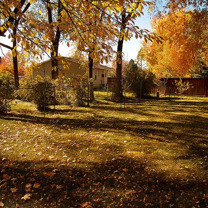Aprende a cuidar de tu jardín durante el otoño