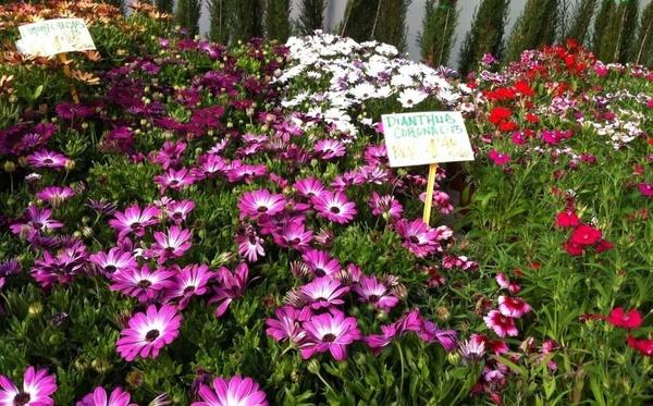 Llega la primavera en Garden La Palma