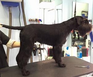 Peluquería canina en Madrid