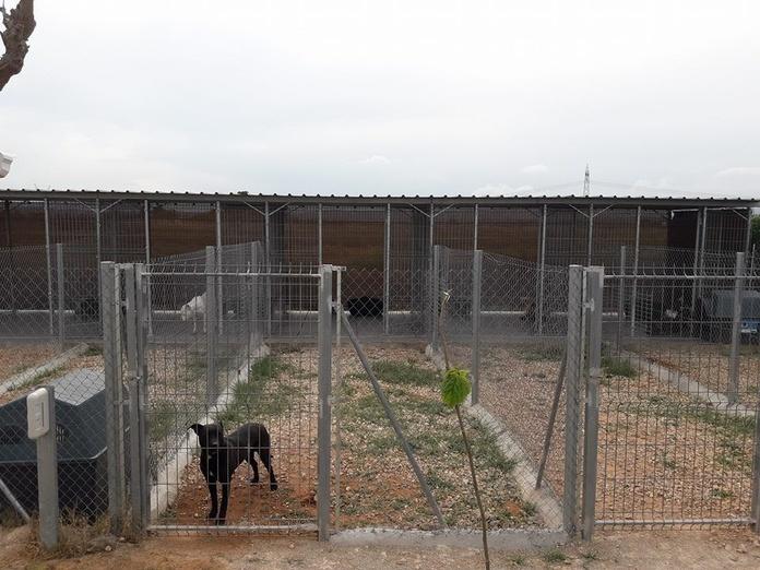 Residencia canina: Servicios de Centro Canino Unidos
