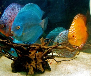 Diseño y montaje de acuarios