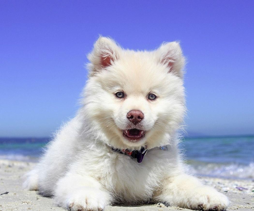 Ayuda a tu perro a combatir el calor con ropa de verano