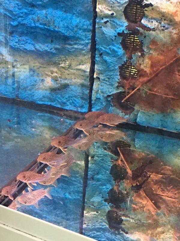 Especies nuevas de peces