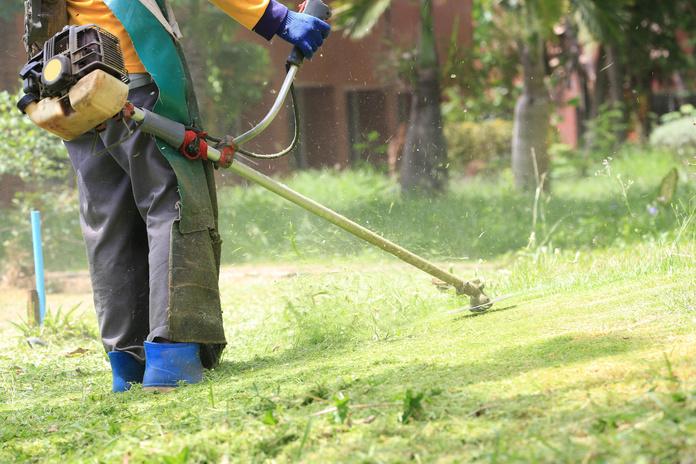 Desbroces: Servicios de Jardinería Roberto