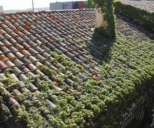 Linpieza de tejados y canalones