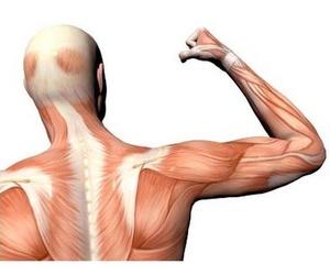 Fisioterapia manipulativa articular