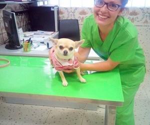 Clínica veterinaria en Almazora - Castellón