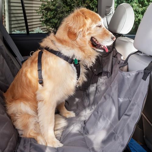 Transporte de mascotas en Ferrol