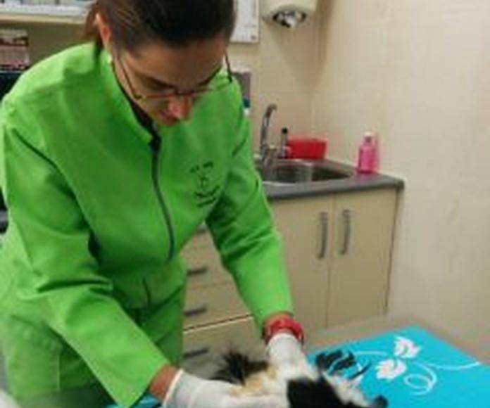 Animales exóticos: Servicios de Centro Veterinario Delfines