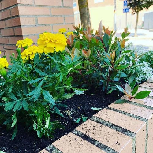 Construcción y mantenimiento de jardines navarra
