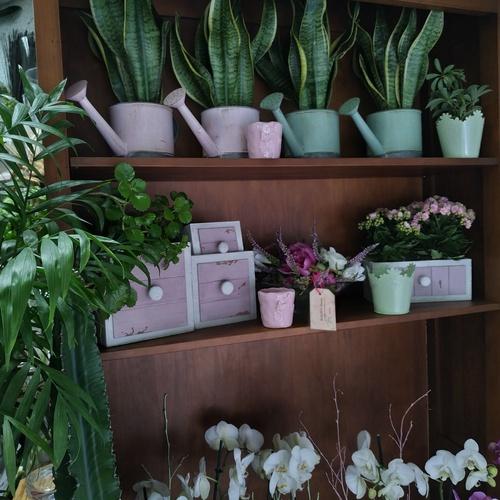 Floristerías en  | Flores Maranta