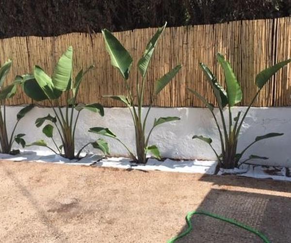 Plantación y abonado