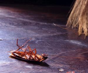 Después de las lluvias llegó el calor y con él, las cucarachas