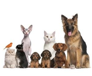Empresa de logística, alimentación y complementos para mascotas