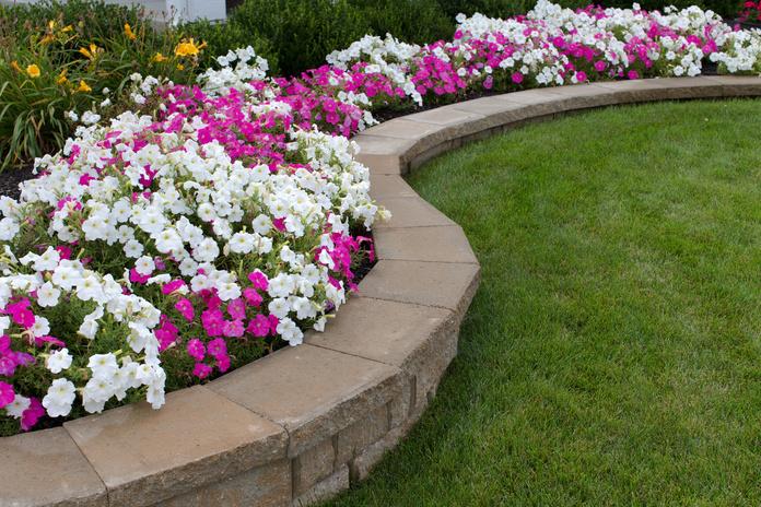 Diseño y mantenimiento de jardines: Servicios de Jardinería Roberto