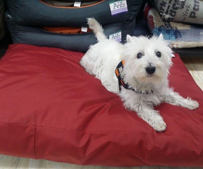 Colchones: Productos y servicios de Més Que Gossos