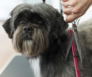 Peluqueros caninos Gijón