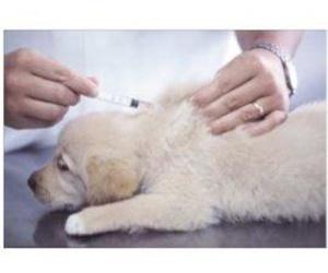 Vacunaciones y desparasitaciones