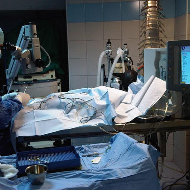 Oftalmología y cirugía ocular: Servicios de Hospital Veterinario Constitución