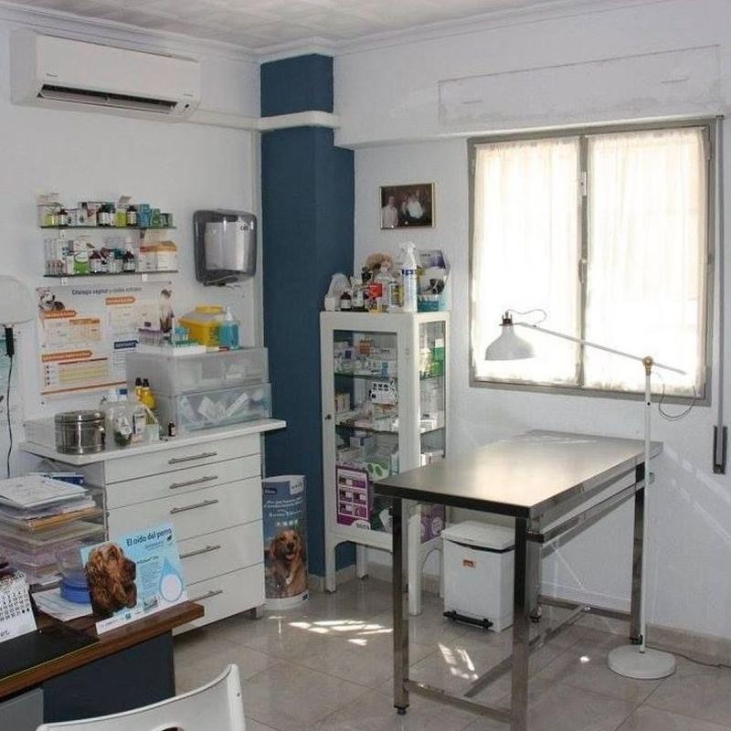 Consultas generales: Servicios de Clínica Veterinaria Jeremías