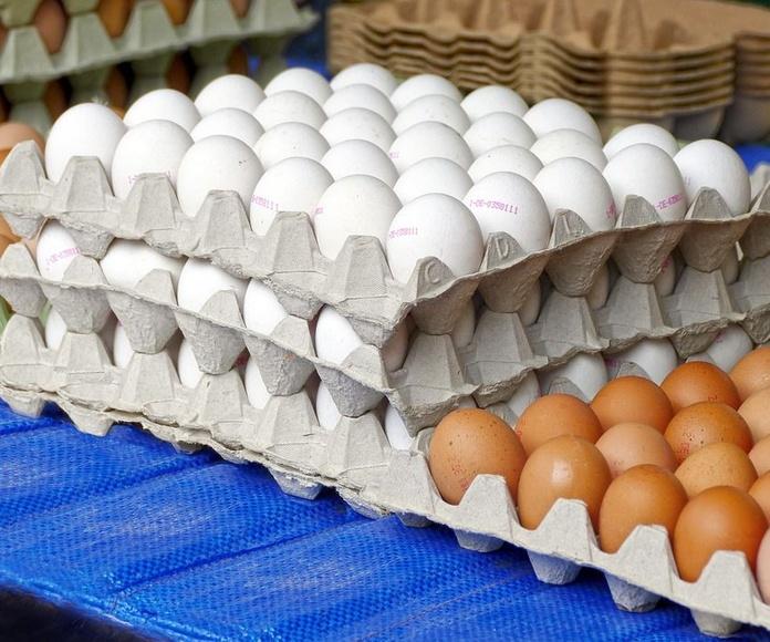 Distribución de huevos