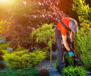 Servicio de jardinería en Toledo