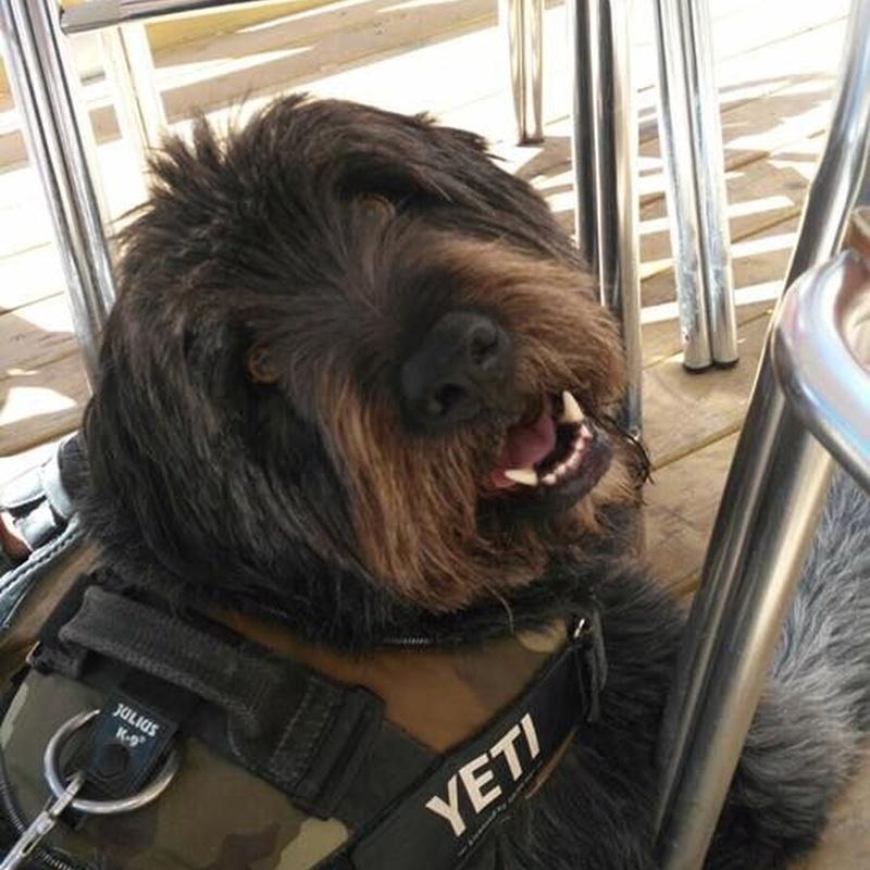 Tratamiento de problemas de conducta: Servicios de Cinopolis Adiestramiento y Educación Canina