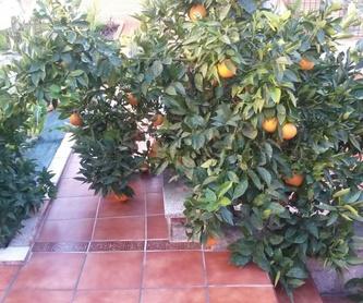 Decoración de exteriores: Servicios de Jardinería IGLE-MAN