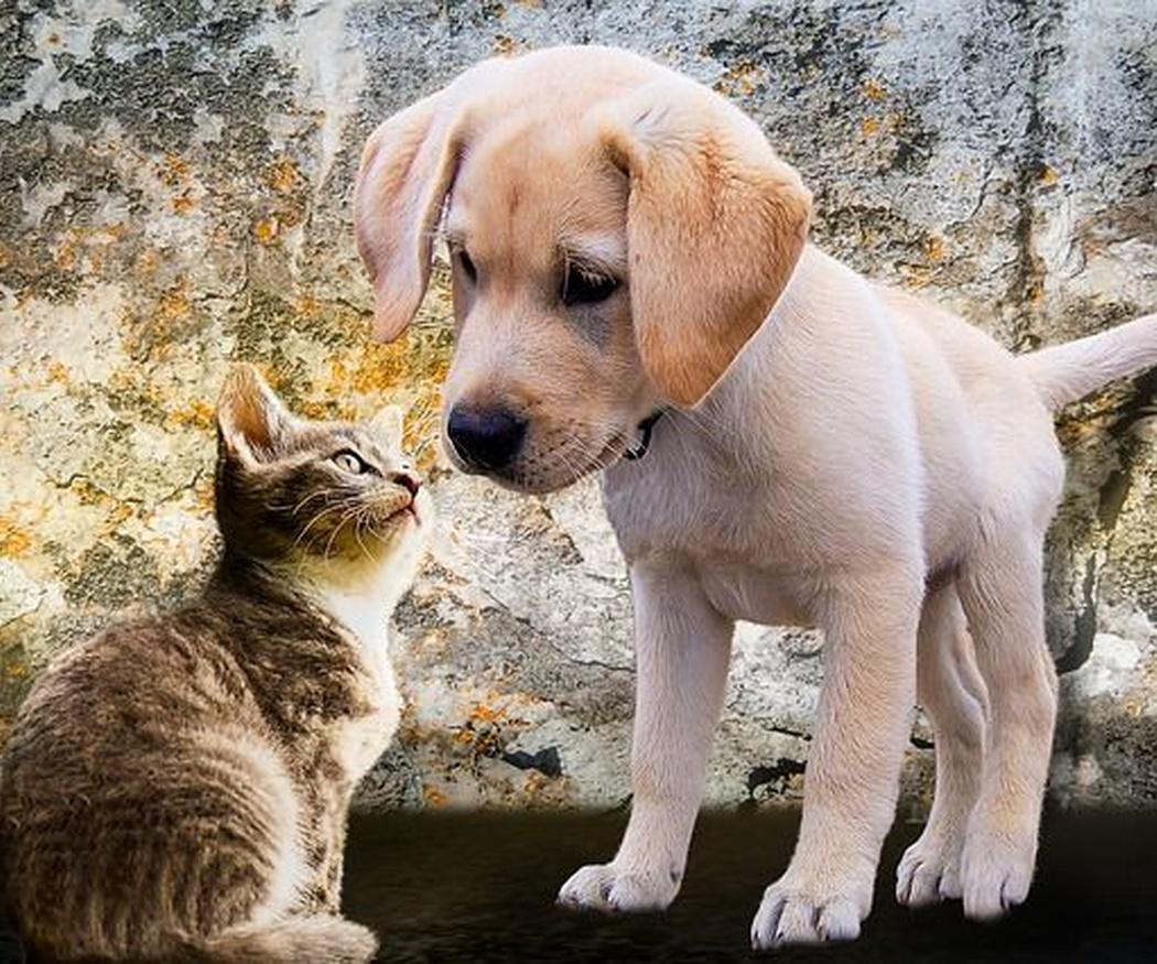 ¿Sabes para qué sirve el omega 3 en perros y gatos?