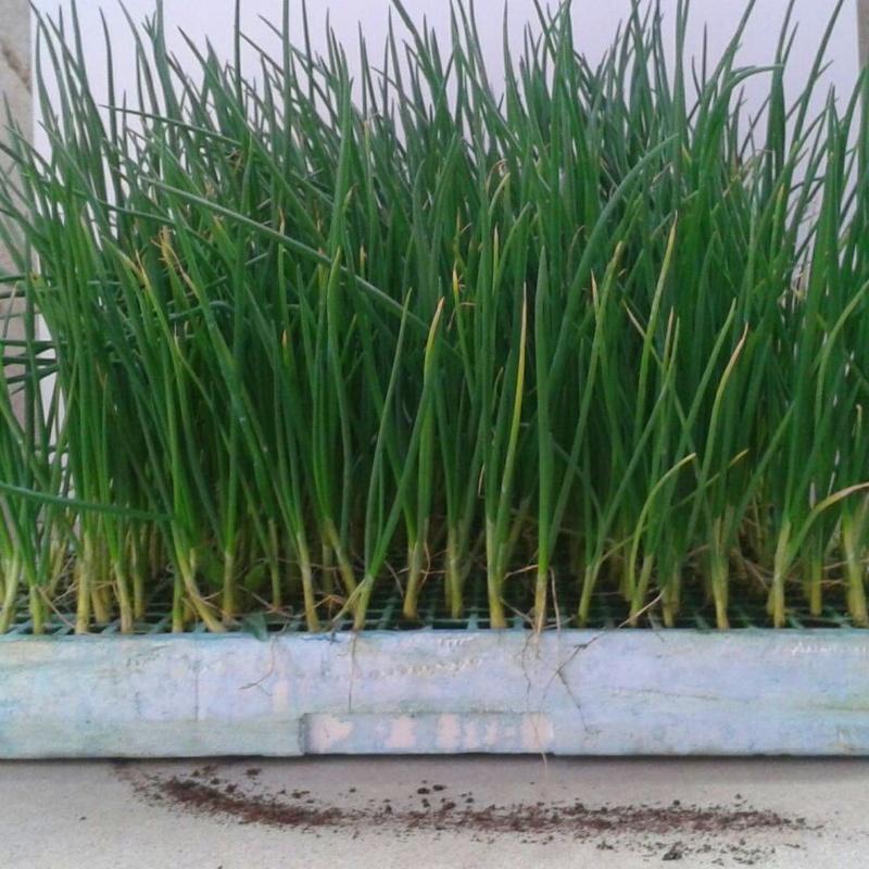 venta de plantas en talo en bizkaia