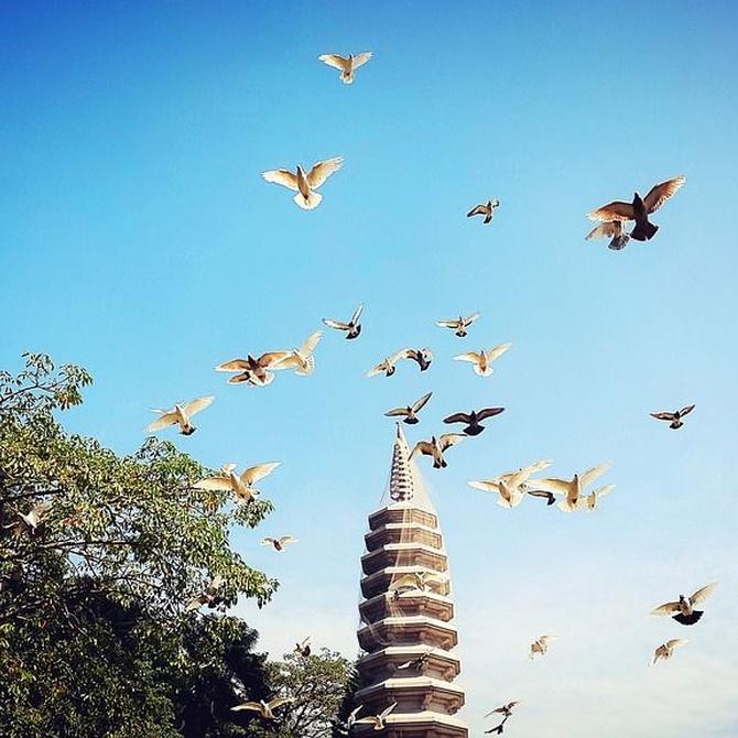 ¿Cómo controlar las plagas de palomas?