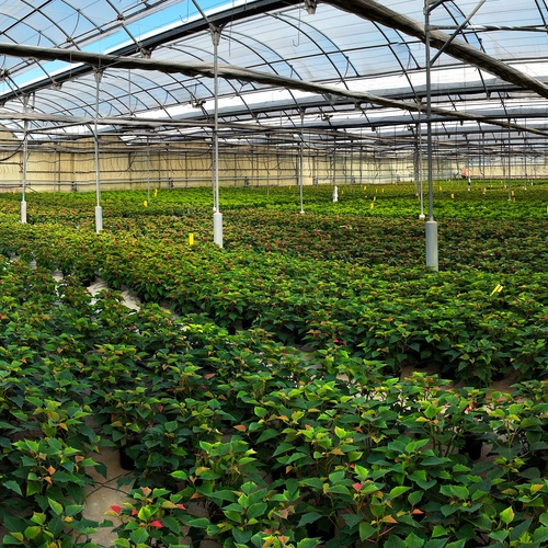 Viveros de plantas ornamentales Valencia | Viveros Algeplant