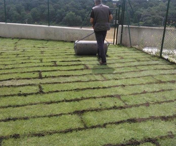 Colocación de Tepe: Nuestros Trabajos de Todojardín