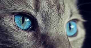 Revisión gratuita para gatos mayores