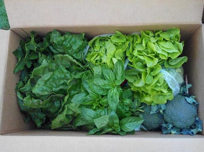 Verdura ecológica: Productos de Mizona Ecológica