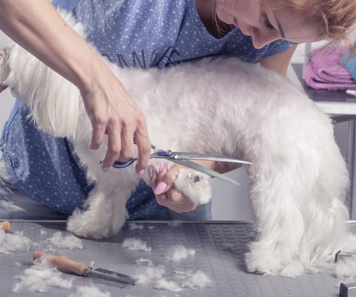 Peluquería canina y felina: Servicios de Serveis Veterinaris Esparreguera