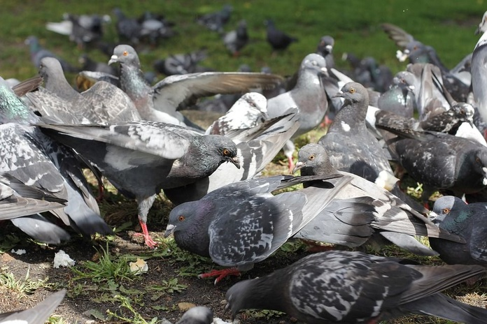Control de aves: Servicios de Pineda Servicios Integrados