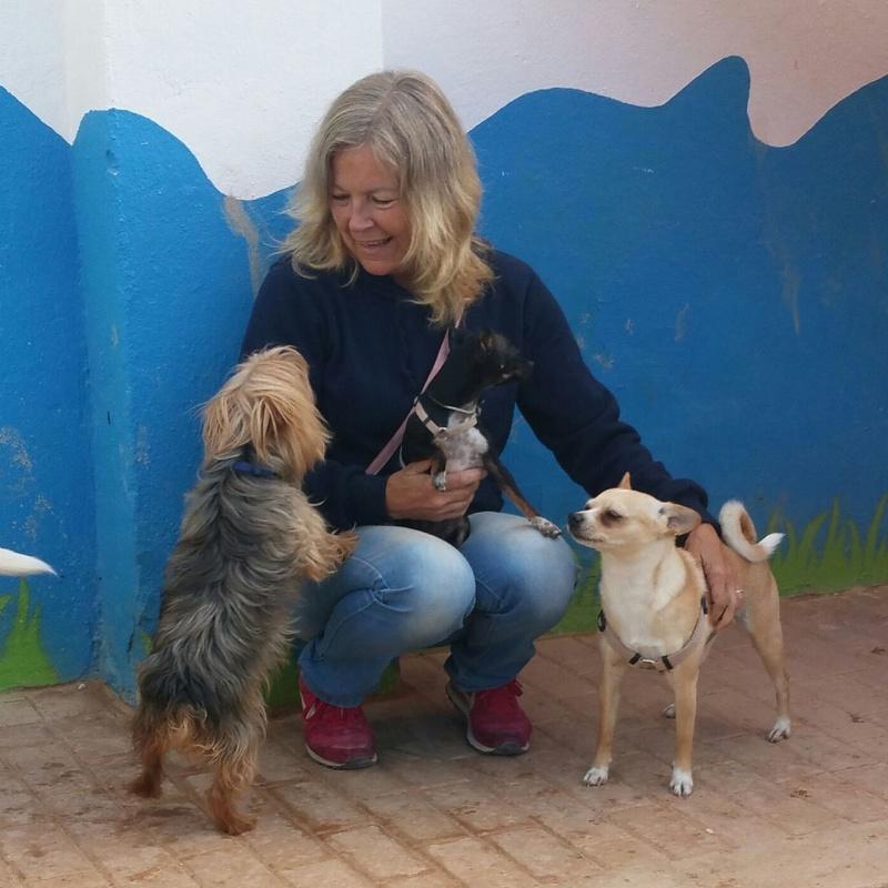 Modificación de conducta o Adiestramiento personalizada: Servicios de Hotel Canino y Felino El Rey de la Casa