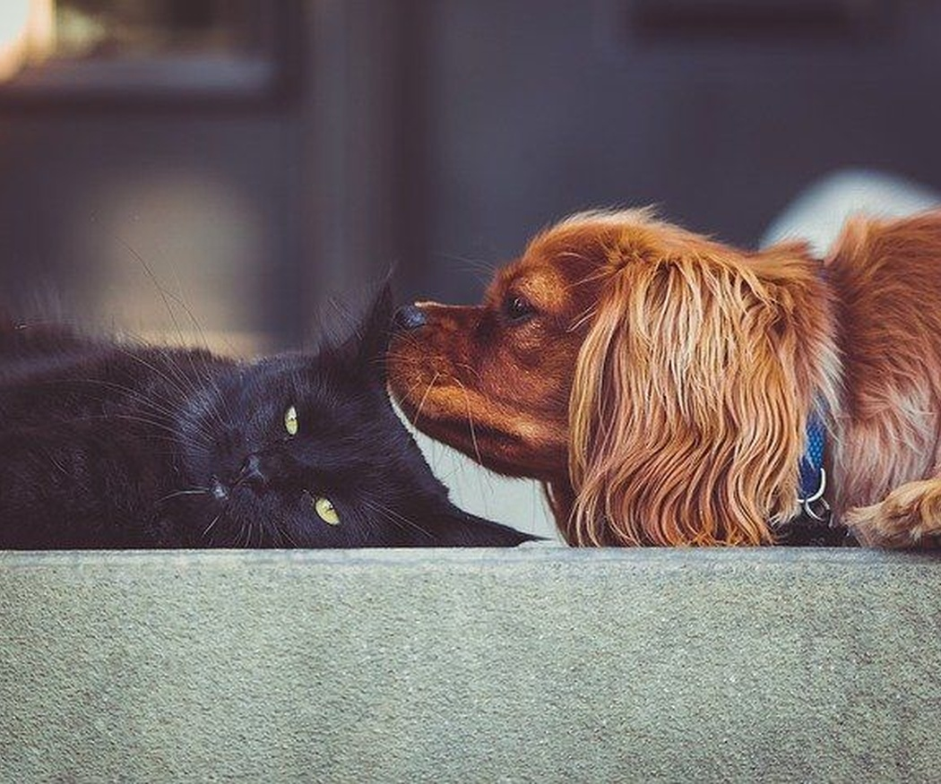 La terraza, el espacio ideal para tu mascota