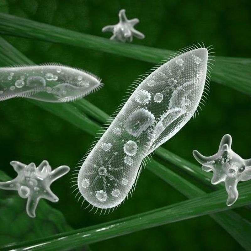 MICROORGANISMOS : SERVICIOS  de Simmply